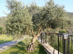 Natureland Efes Pension, Residence  Selçuk - big - 18