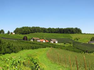 Weingut Dietl, Appartamenti  Riegersburg - big - 78