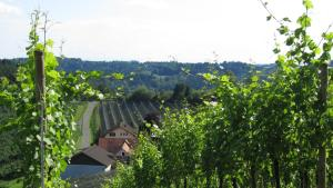 Weingut Dietl, Апартаменты  Ригерсбург - big - 80