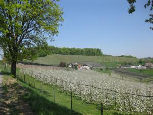 Weingut Dietl, Appartamenti  Riegersburg - big - 55