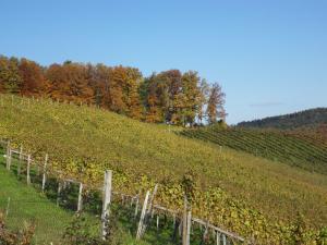 Weingut Dietl, Appartamenti  Riegersburg - big - 54