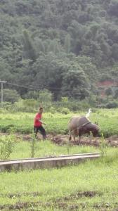 Yangshuo Zen Valley, Pensionen  Yangshuo - big - 28