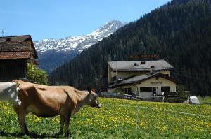 Accommodation in Medels im Rheinwald