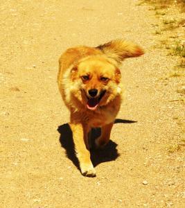 Motel Golden Fox