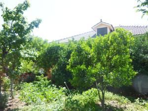 Vila Altini Borsh, Apartmanok  Borsh - big - 42