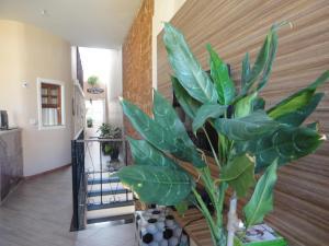 Pousada Pedacinho da Bahia, Гостевые дома  Сальвадор - big - 40