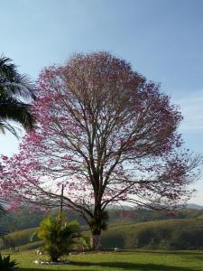 Pousada Canto do Lago, Гостевые дома  Пиракая - big - 70