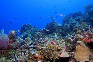 Lawson Rock - Parrotfish 206