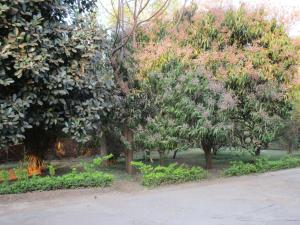 Longonot Guest House, Vendégházak  Lilongwe - big - 16