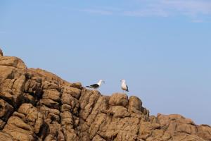 Blue Whale Resort, Villaggi turistici  George - big - 18
