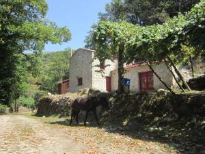 Picoto House - Sobredo
