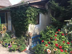 Гостевой дом Грушевый дом