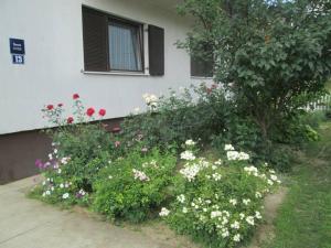 Jelić Guest House, Pensionen  Bilje - big - 34