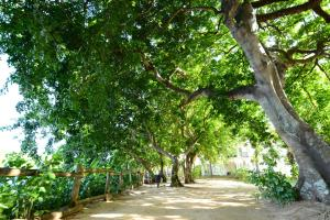 The Ravenala Attitude, Resort  Balaclava - big - 64