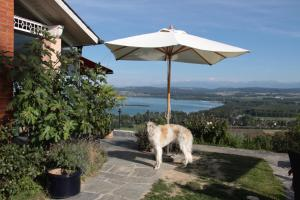Swiss Borzoi House, Bed and Breakfasts  Bellerive - big - 38
