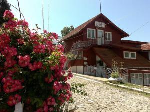 Pensiunea Floare de Colt - Hotel - Sinaia