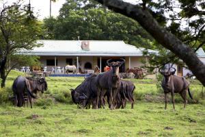 Santa Paloma Guest Farm - Macleantown