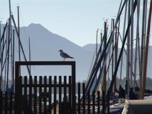 Zum Fischer am See, Penzióny  Prien am Chiemsee - big - 19
