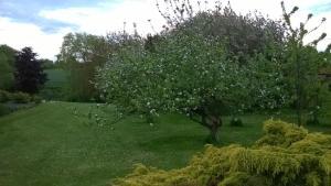 Orchard View - binbrook