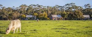 Hostels und Jugendherbergen - Freshwater Creek Cottages & Farm Stay