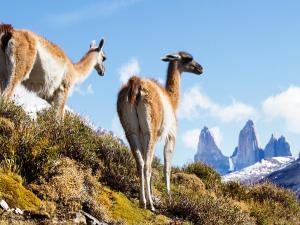 Noi Indigo Patagonia (19 of 39)