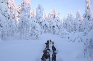 Guesthouse Husky - Hotel - Ivalo