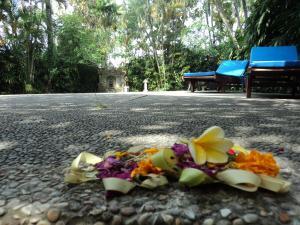 Villa Bhuana Alit, Гостевые дома  Убуд - big - 68