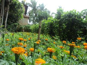 Villa Bhuana Alit, Гостевые дома  Убуд - big - 93