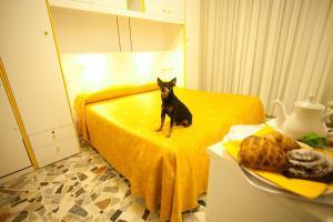 obrázek - Hotel Medusa