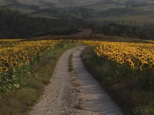 Agriturismo Il Pallocco, Farm stays  Montecastrilli - big - 119