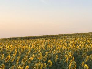Agriturismo Il Pallocco, Farm stays  Montecastrilli - big - 112