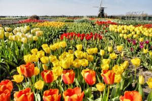 Buitenplaats Witte Raaf aan Zee, Villas  Noordwijk - big - 22