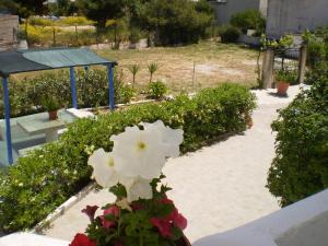 Barbara II Aegina Greece