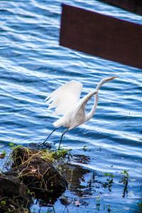 Jicaro Island Ecolodge (28 of 33)