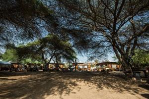 Shkedi's Camplodge - Idan