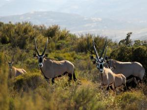Naries Namakwa Retreat, Chaty  Goop - big - 66