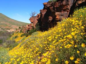 Naries Namakwa Retreat, Chaty  Goop - big - 74