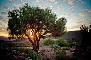 Naries Namakwa Retreat, Chaty  Goop - big - 101