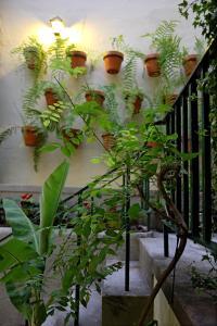 29 Madeira Hostel by Petit Hotels, Ostelli  Funchal - big - 24