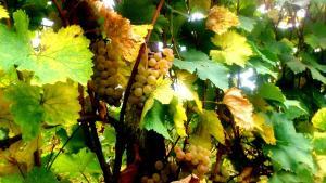 Guest House Gardenia & Wine Cellar, Penzióny  Lagodekhi - big - 33
