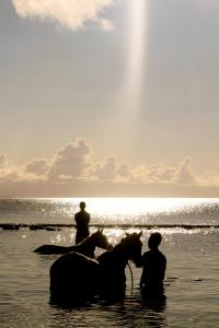 Tides Reach Resort (13 of 36)