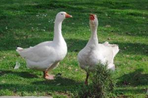 Agriturismo L'Oca Bianca