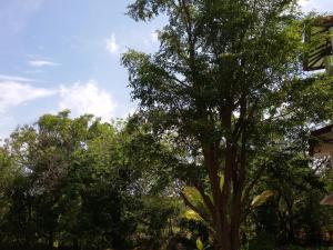 Orchid Palace, Szállodák  Anuradhapura - big - 84