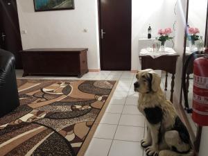 Apartments Villa Mungos, Apartmány  Sobra - big - 85