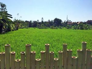 Bali Green Hostel, Ostelli  Seminyak - big - 11