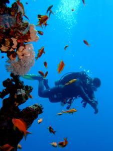 Steigenberger Aqua Magic Red Sea photos