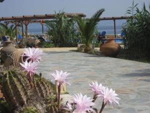 Irides Aegina Greece