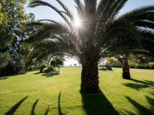 Tiamo Secrets - Palm Garden, Villen  Vourvourou - big - 5