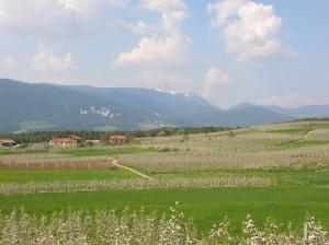 Agritur Maso San Bartolomeo, Farmy  Romeno - big - 22