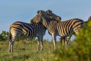 Lalibela Game Reserve (25 of 184)